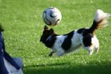 Football at Holyrood Park