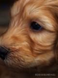 hond11.jpg