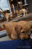 hond4.jpg