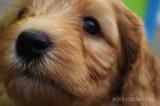 hond5.jpg