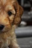 hond9.jpg