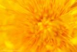 Dandelion (Taraxacum officinale)