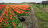 Texel in the Spring