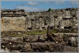 Iguana Viewing the Ruins
