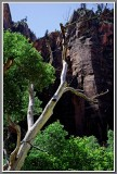 Weeping Rock Area, Zion