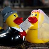 - 22nd March 2011 - Quack