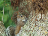 P3120865_squirrel_800.jpg