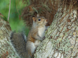 P3120874_squirrel_800.jpg