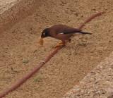 P4051027_bird_800.jpg