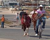 P6182209_bikehorse.jpg