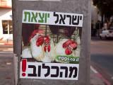 P7212439_chickenposter_800.jpg