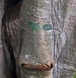 P9052621_treeface