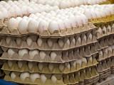 PB062888_eggs