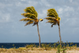 Bonaire 2012-30