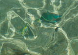 Bonaire 2012-38