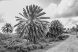 Antigua 2012-11