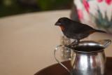 Antigua 2012-18