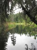 Meldas Marsh Seal Bay Park 1a.jpg
