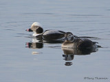 Long-tailed Duck winter male and female 1b.jpg