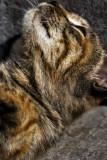 Sleepy Cat !
