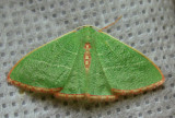 Arizona Moths - 2012