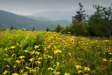 Roan Balds Trail