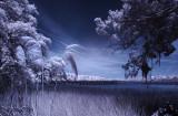 Marsh Vignette