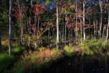 Autumn-in-the-Swamp-1.jpg