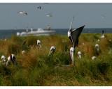 0928 Breton Island