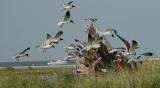 0849 Breton Island