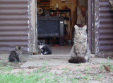 Cats with old Ablert