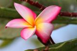 Maui 2011_008.jpg