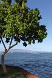 Maui 2011_034.jpg