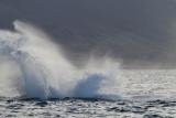 Maui 2011_100.jpg