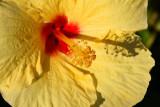 Maui 2011_114.jpg