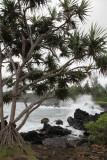 Maui 2011_133.jpg