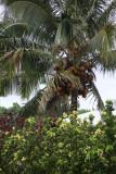 Maui 2011_139.jpg