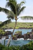 Maui 2011_161.jpg