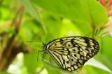En el Mariposario / In the Butterfly Zoo