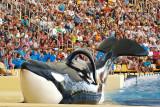 Espectáculo de las orcas en el Loro Parque / Orca's show at Loro Parque