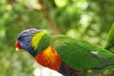 Uno de los muchos loros / One of the many parrots