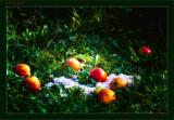 Dans les pommes