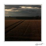 Champs de blé au soir.jpg
