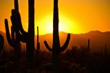 Arizona, November 2011