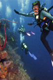 Utila & Roatan Scubadiving - Aggressor Jan 2012