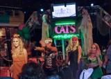 Sat Nite at Cat's Meow