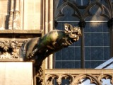 Cologne Cathedral Gargoyle