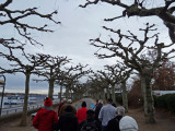 Sycamore-lined Path in Mainz, Germany