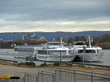 Boats Moored Side-by-Side on the Rhine River in Mainz