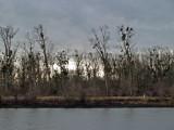 Mistletoe Along the Rhine